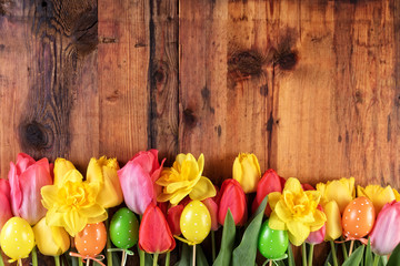 Easter rustic background. Pink and yellow tulips and daffodil flowers in the row on old wooden planks.