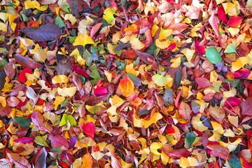 晴天の公園の秋の風景15