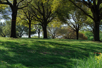 Trees and grass in the city park on a sunny spring morning in Dallas