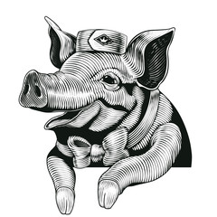 Engraving style pig