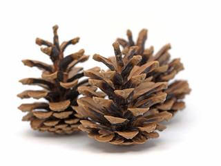 Kiefernzapfen, Kiefer, Pinus, Zapfen