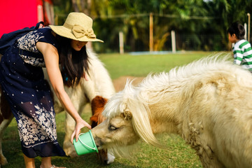 woman traveler feeding animal in the open farm.lady tourist give food to animal.
