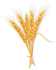 Sheaf of wheat isolated on a white background.