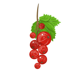 Red currant. Realistic vector illustration of berries and green leaves on white background.