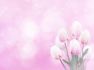 Pale pink tulip flowers bouquet background