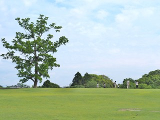 Lonely big tree and many people on the green field with blue sky at Nara park in Nara Prefecture, Kansai, Japan.