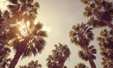 Vintage toned palm trees over clear sky background with copy space