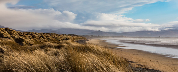 Scenic panorama view of grass covered sand dunes on Banna beach in county Kerry, Ireland Wall mural