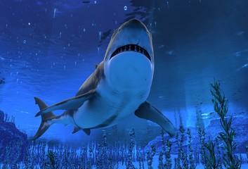 Great white shark swimming underwater 3d illustration