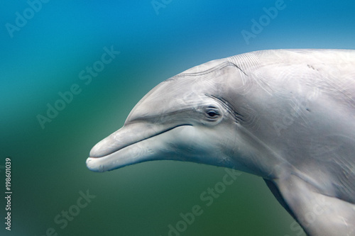 dolphin close up portrait detail while looking at you