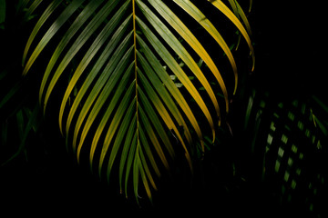 green and yellow palm leaves in the forest