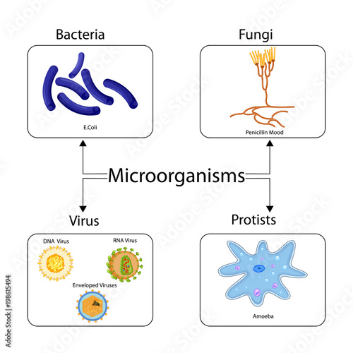 Education chart of biology for types of microorganism diagram stock education chart of biology for types of microorganism diagram ccuart Choice Image