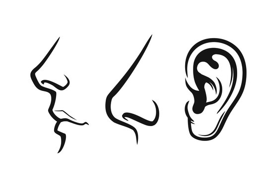 Nose, mouth, ear