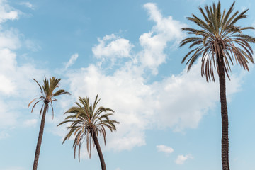 palm trees blue sky summer