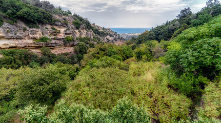 Green trees in forest at Crete, Greece