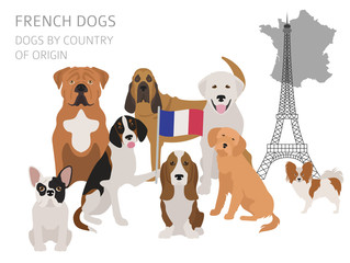 Dogs by country of origin. French dog breeds. Infographic template