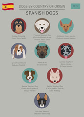 Dogs by country of origin. Spanish dog breeds. Infographic template