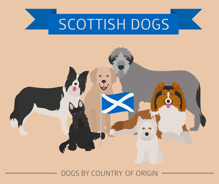 Dogs by country of origin. Scottish dog breeds. Infographic template
