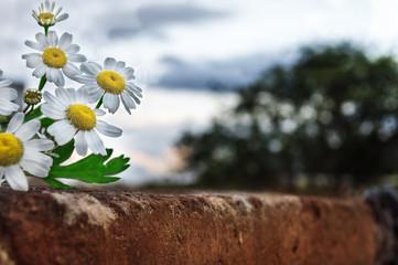 flor amarilla sobre un muro de ladrillos con un fondo  de nubes