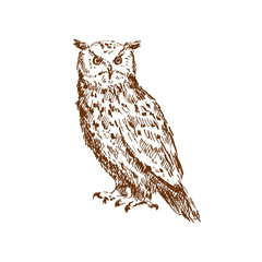 Hand drawn owl. Sketch, vector illustration.