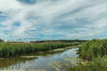 Beautiful summer landscape with little river. High green grass