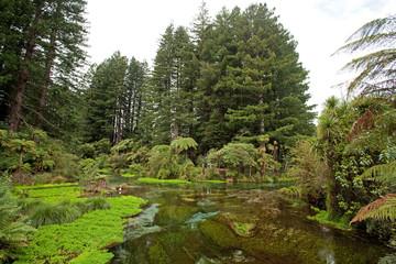 red wood, new zeland