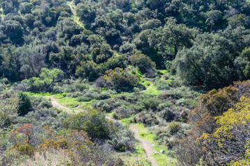 Hiking and biking trails in California forest on spring morning