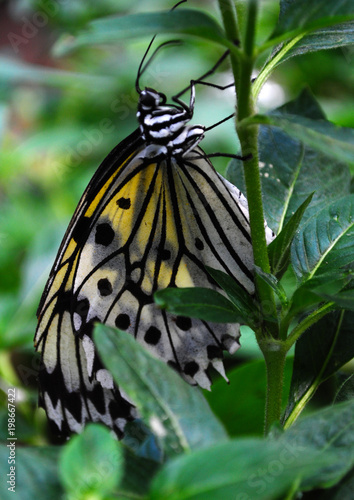A butterfly perched on a green leaf among foliage and plants.