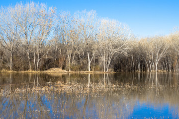 Wetland and forest in very early spring at Bosque del Apache National Wildlife Refuge in New Mexico