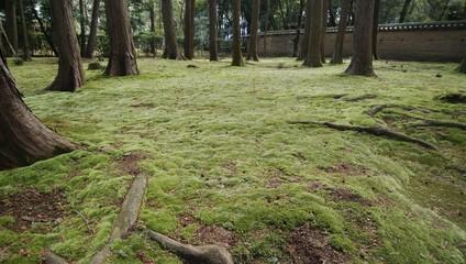 唐招提寺の苔