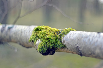 tree covered with green moss