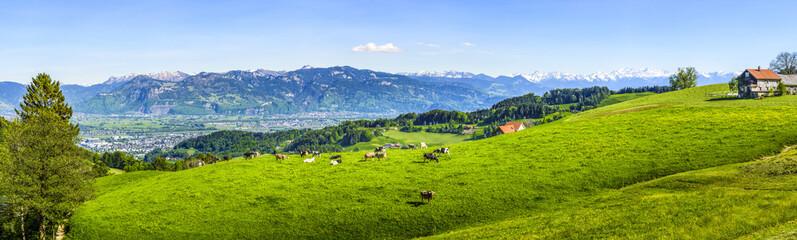 Kühe auf einer Weide in der Ostschweiz