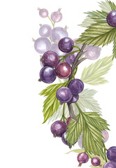 Hand-drawn watercolor blackcurrant. Can be used as a greeting card for background, birthday, mother's day and so on. Romantic background for web pages, wedding invitations, wallpaper.