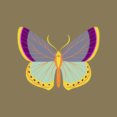 Colorful icon of butterfly isolated on brown