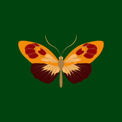 Colorful icon of butterfly isolated on green