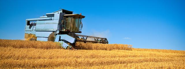 Récolte de blé dans les champs de France