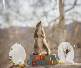 red squirrel standing on words happy easter