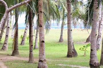 Exotic Island, Philippines