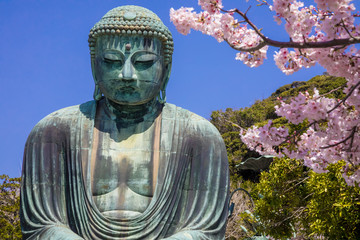 Great Buddha.The foreground is cherry blossoms. Located in Kamakura, Kanagawa Prefecture Japan.