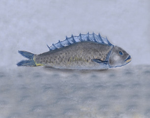 A lying fish drawn by soft pastel on a gray background.