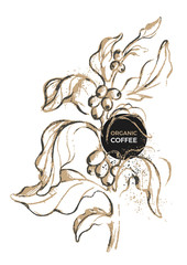 Realistic coffee branch. Vector botanical illustration