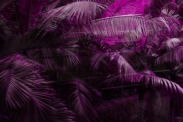 Deep dark purple colored filter palm leaves pattern with. Creative layout, toned, horizontal