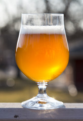 beer in tulip glass_centered