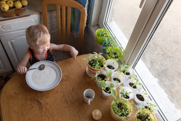 Rustic little boy is having breakfast in kitchen with brother. Children eat semolina porridge cooked by caring father. On window in pots grows green seedling tomato, pepper for planting in garden
