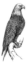 black and white engrave isolated eagle illustration