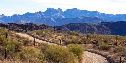 Dawn on the main road into Organ Pipe Cactus National Monument in southern Arizona, showing the Ajo Mountains