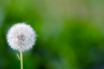 Daisy flower on blurred grass background