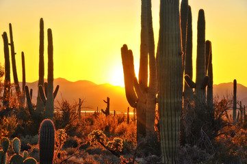 Aluminium Prints Arizona Saguaro Sunset