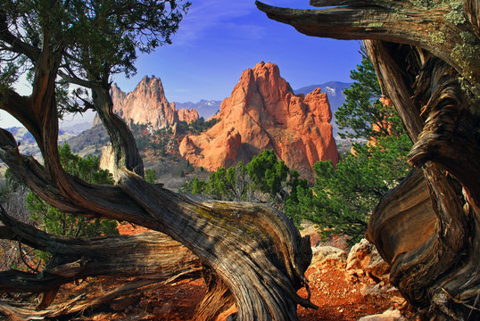 Garden Framed by Twisted Juniper Trees at the Garden of the Gods Colorado Springs