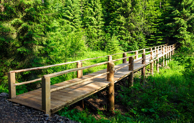 small wooden bridge among the forest